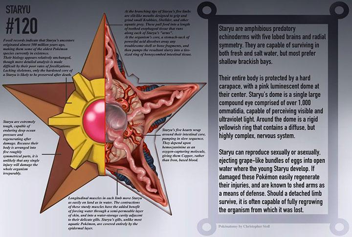 A Detailed Illustration Of Pokémon Anatomy